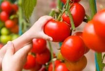 Garden - Fruits & Vegetables / by Happy Farmgirl