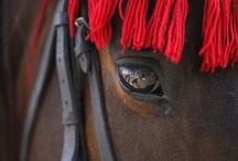 Equine Beauty / by Claudia Galbois