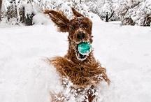 dogs / by Angela Bird-meyer