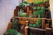 Gardening Zen / by Christy SassDeluxe