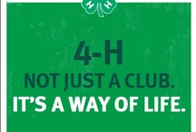 4-H / by Nicki Nelson