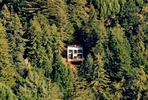 Tree Homing / With the odd cabin thrown in. / by Maptia