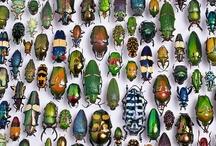 Bugs / by Donna LaFleur