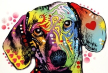 Colorful / by Janet Dansie