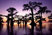 Louisiana / by Donna LaFleur