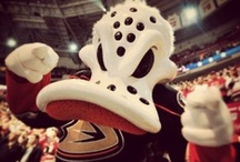 Wild Wing / Pictures of the Anaheim Ducks mascot, Wild Wing. / by Anaheim Ducks