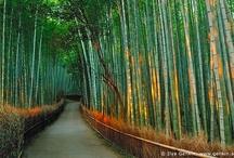Nature Photography / by Liz Thrush