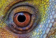 Reptilia / by Donna LaFleur