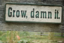 Brown Thumb / I can grow weeds and children.  That's about it. / by Ginger Hails