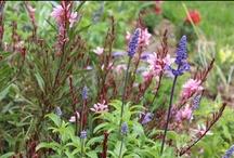 Flowers in My Garden / by Dextre's Garden