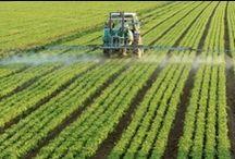 KNOW GMO / by Lyndsay Stradtner