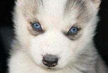 Puppy!!  / by Tayler Koller