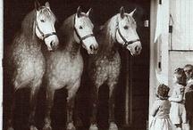 horses / by Sarah Vanderhoof