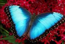 Butterflies / by Linda Hunt