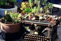 garden stuff / by Leann Lindeman