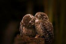 Owls / by Lianne Dups