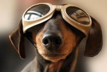 Dogs,Dogs,Dogs / by Brenda Fowkes