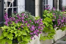 Lush Patio / by Jackie Leger