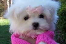 Awww, how cute / by AnnieLorraine