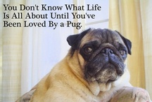 <3 Crazy Pug Lady <3 / Dedicated to My baby boy Pugsy Rufus~ Pugs are the cutest dogs in the whole world!!!!! / by ღBambi Wenrich♔