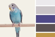 { budgie blues } / a collection inspired by { budgie bluest } inspiration @ http://bit.ly/HWmFSA / by Design Seeds