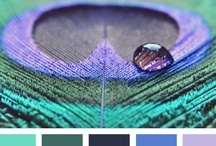 {  peacock hues } / by Design Seeds