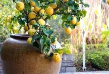 Gardening / by Sara Ciolli