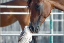 Animals in good company / Animals interacting together with others / by Rochelle G