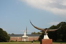 UNC Wilmington / by Amber Mangione