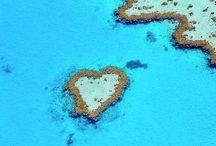 I Heart Hearts / by Dee Iacopelli