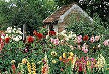 Cottage Garden / by Debbie Beukelman