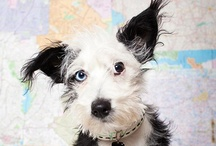 dog portraits / by Sam Bertie