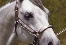 Horses... / by Christi Roth