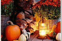 Fall - Halloween, Thanksgiving etc. / by Paula Coombs