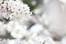 Springtime / by Tonya Bundy