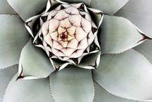Succulents / by Tonya Bundy