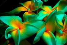 Flowers  / Flowers that bring beauty to our lifes. / by Carmen Castro