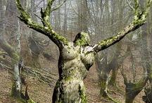 kool trees / by Anita Brooks