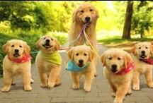 I LOVE DOGS!!!! / by Mitzi Tkach