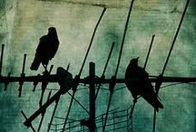 For the Birds (Art) / by Libby Carlson