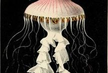 Under The Sea (Art) / by Libby Carlson