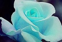 Awsomely beautiful flowers / by Debbie Swank