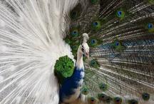 Beautiful birds & butterflys / by Debbie Swank