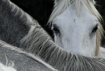 Magnificent animals / by Debbie Swank