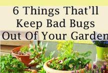 Gardening / by Bobbi's Kozy Kitchen