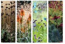 Beautiful Borders & Plant Combinations / 1 + 1 = 3 | plants, creative combinations, beds & borders / by VanLieshout VI