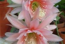 Flowers / by Julie Wilson-Mumford
