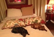 Womans best friend / Pets and dachsunds / by Judith Ott