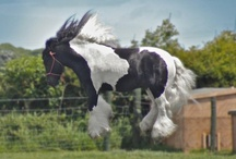 Horses...for Morgan Paige ♥ / by Morningwood Farms