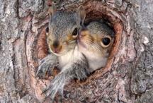 A Little Squirrel-y :-) / by Morningwood Farms